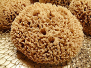 Губка натуральная морская декоративная  - foto 1