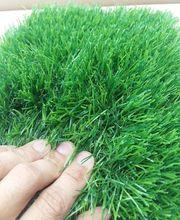 Искусственная трава оптом и в розницу по низким ценам - foto 0